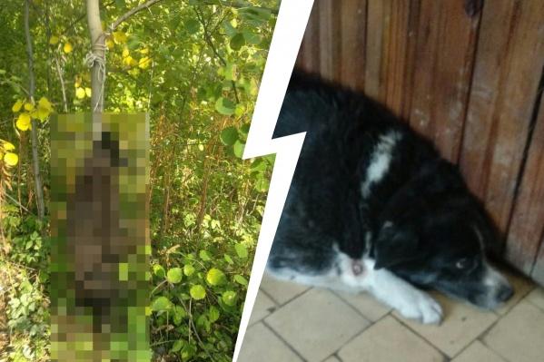 Соседи относились с пониманием к тому, что собака жила в подъезде