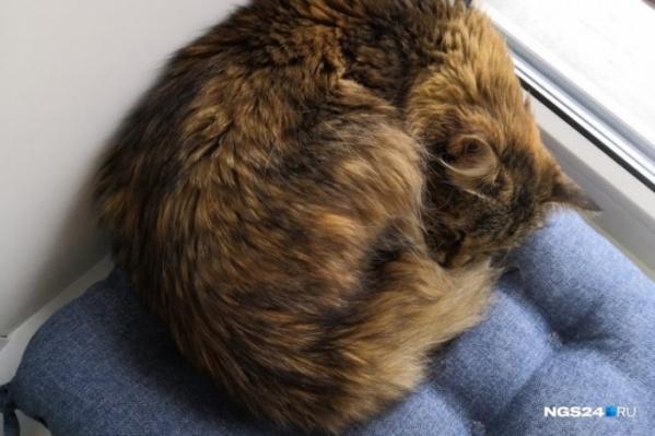 Кошка получила травмы после падения