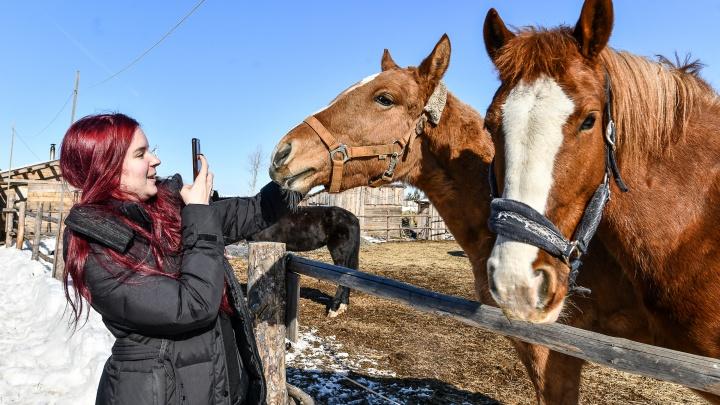 Молодая пара из Екатеринбурга бросила город и уехала жить в деревню, чтобы выхаживать раненых лошадей