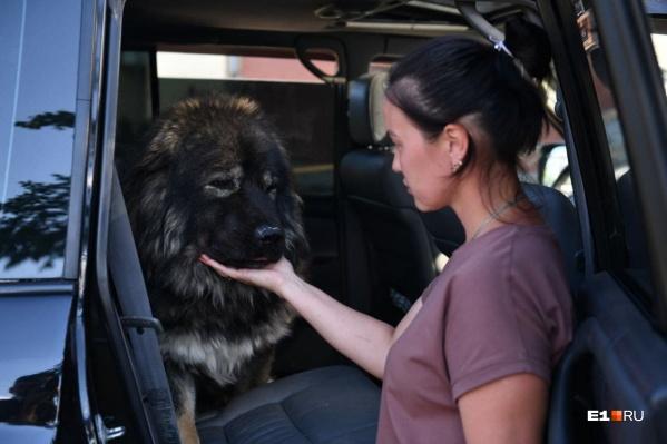Хозяйка питомника ночует в машине вместе со своими собаками, которые остались без дома