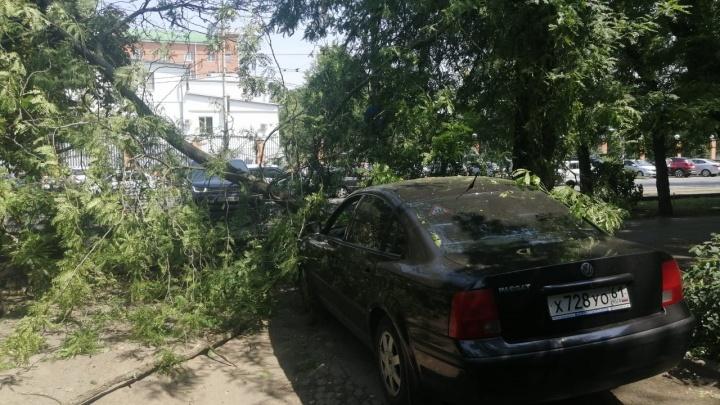 В Ростове упавшее дерево оборвало провода и повредило иномарку. Жилые дома остались без электричества