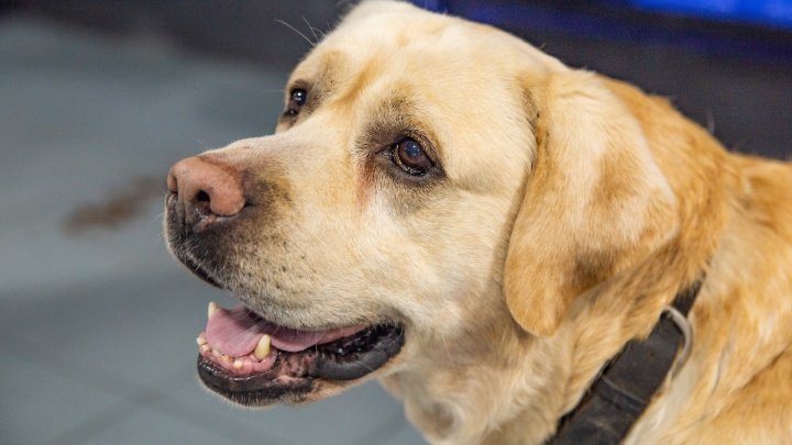 Сейчас некому отлавливать собак: в Ярославле построят приют для бездомных животных