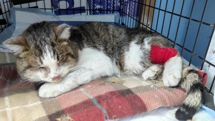 В Екатеринбурге спасают кота, которого выбросили в сугроб в лютый мороз. Он на грани смерти