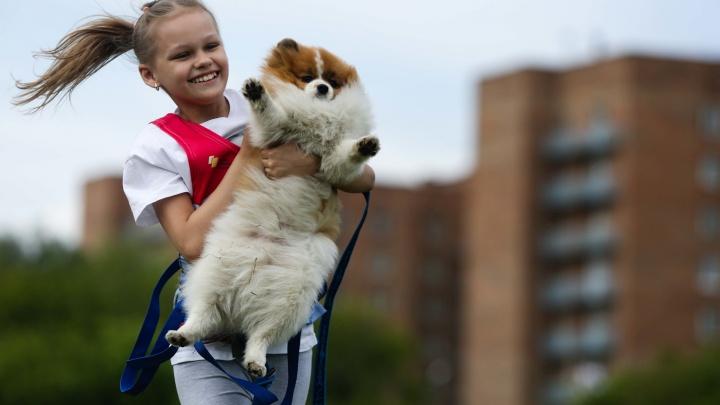 От терапевта-хаски до спасателя-овчарки: талантливых собак собрали на стадионе, а мы их пофотографировали
