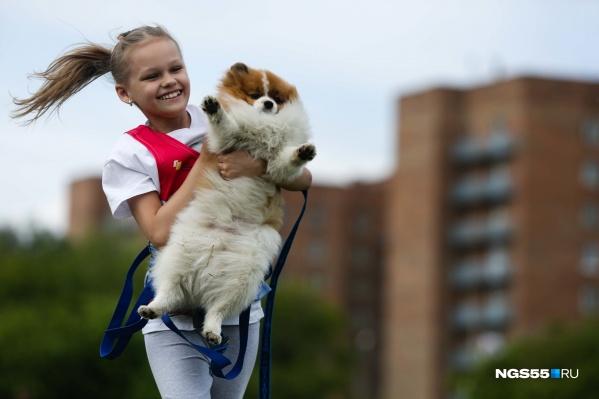«Хвостатый забег» — это ежегодное мероприятие, где собаки демонстрируют свои навыки и умения
