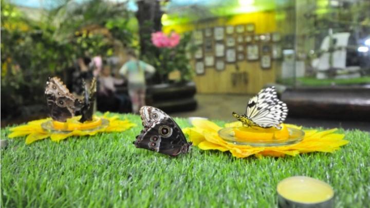 На владельца «Парка бабочек», в котором девочку укусила змея, подали иск в суд