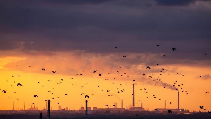 Минприроды России назвало основные источники вредных выбросов в Омске