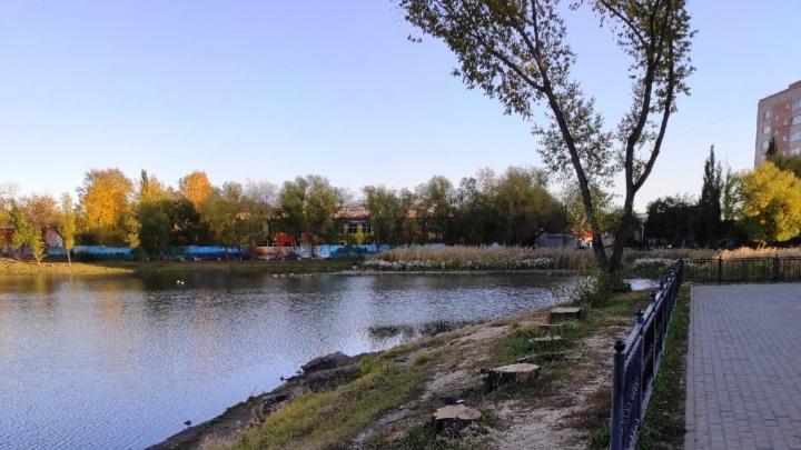 У озера Кирпичка спилили ивы — в мэрии заявили, что они аварийные