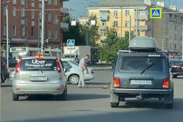 Каждое лето красноярцы провожают утят с дорог, и другие водители относятся к этому с пониманием