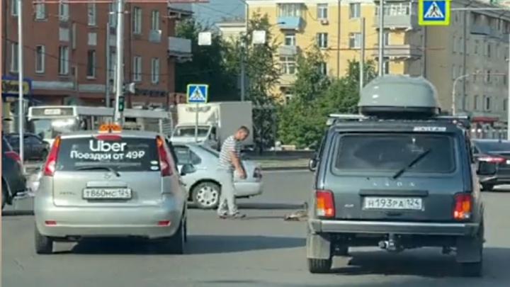 Таксист остановил проезжающие авто на Красрабе и перевел через дорогу уточек с мамой