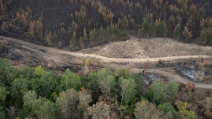 Волгоградцам запретили въезд в леса до середины сентября из-за прогноза синоптиков