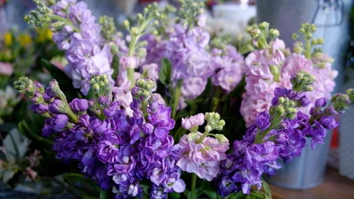 От 600 рублей до бесконечности: челябинцы рассказали, сколько тратят на цветы к 8 Марта
