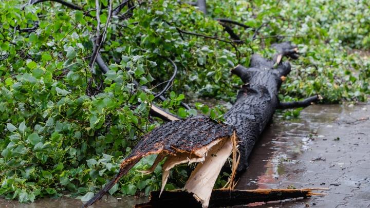 Штормовое предупреждение: в Прикамье ожидаются дожди, грозы и ветер с порывами до 23 метров в секунду