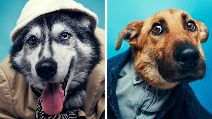 В Екатеринбурге собакам устроили фотосессию, от которой зашкаливают мимиметры