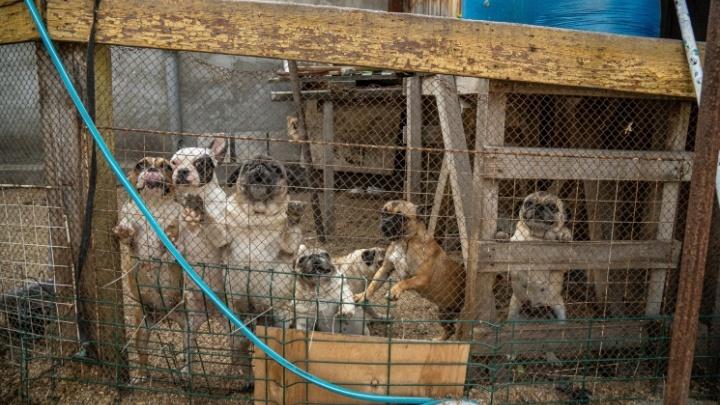 Новосибирский суд решил выселить собак заводчицы с Порт-Артурской