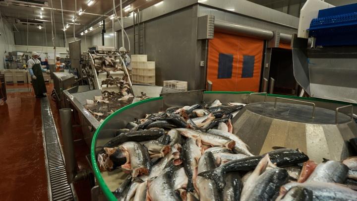 Новосибирский рыбоперерабатывающий завод стал первым в стране участником годового нацпроекта