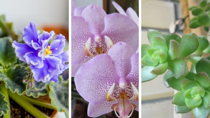 Без сложного ухода: четыре домашних растения, которые сможет вырастить даже «чайник»