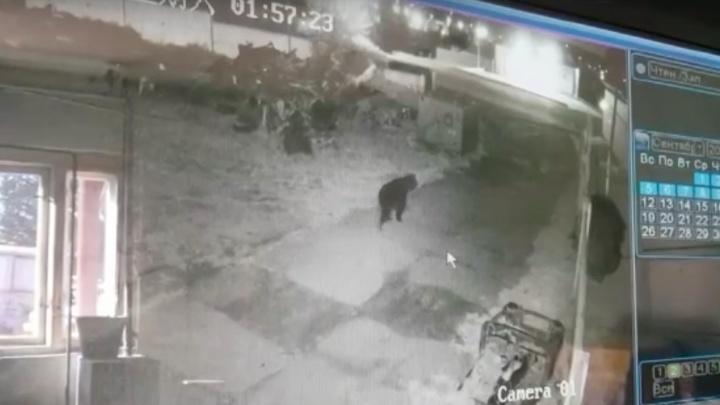Нашествие медведей продолжается: в двух населенных пунктах к людям вышли опасные хищники