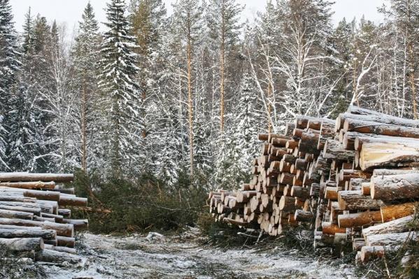 Лес складировали у туристической тропы