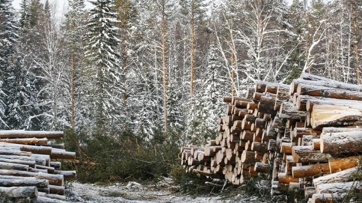 В Башкирии валят лес на Инзерских Зубчатках, власти говорят, что всё законно. Разбираемся с общественником