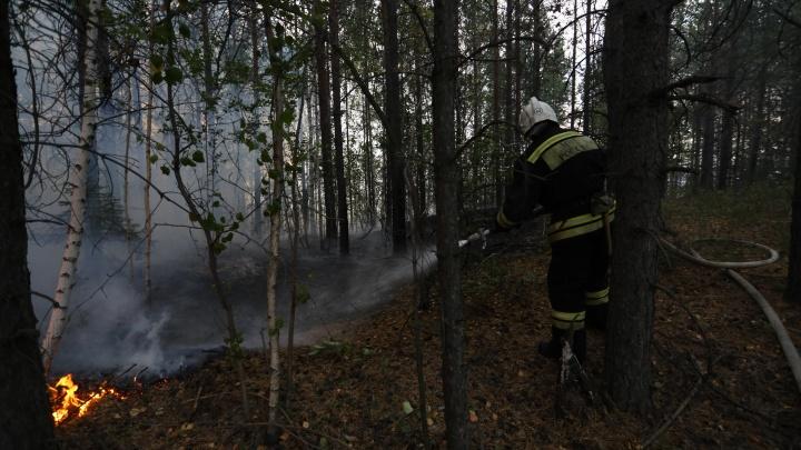 Свердловская область вышла на первое место в стране по числу лесных пожаров. А как было год назад?