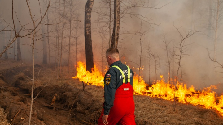 Губернатор продлил запрет на посещение тюменских лесов