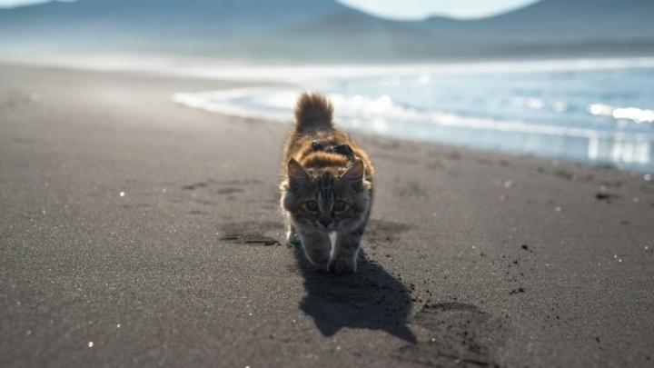 В TikTok набирает популярность видео тюменца с котенком, который впервые увидел океан