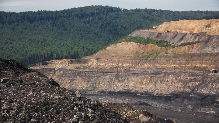 Кто и зачем хочет вырубить почти 8 гектаров леса в Кузбассе: рассказываем в подробностях