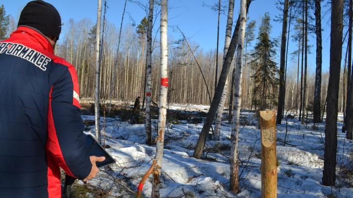 В Уватском районе вальщик упал на работающую бензопилу
