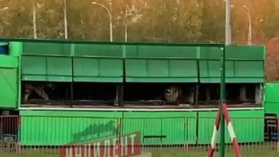 «Лучше помогать бездомным собакам и кошкам»: кемеровчан возмутило появление передвижного зоопарка