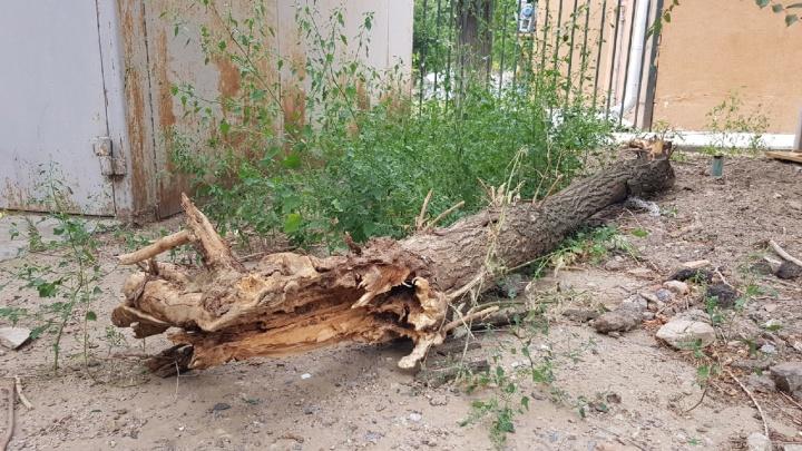 Следственный комитет России найдет виновных в ЧП с покалеченной деревом девочкой