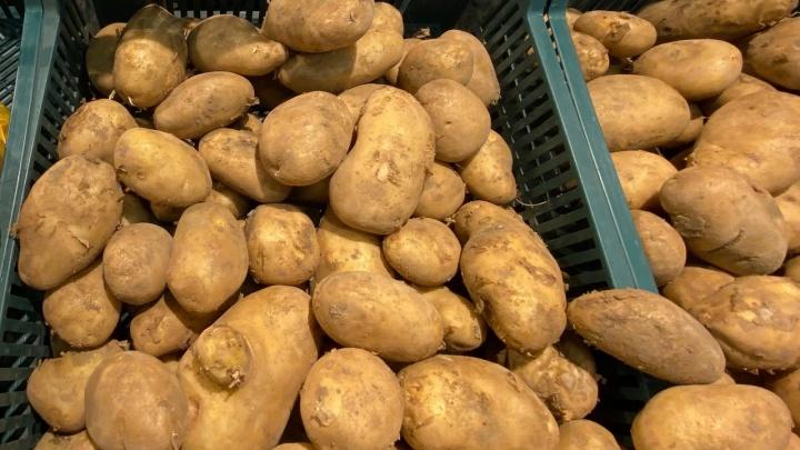100 рублей — не предел: волгоградцев пугают слухами о «золотой» картошке