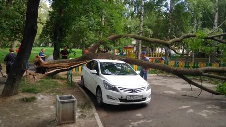 «Ситуация во дворе аварийная»: в Пионерском дерево упало на иномарку