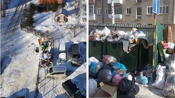 «Мусор уже летает»: Новосибирск завалило отходами— их не вывозят с выходных