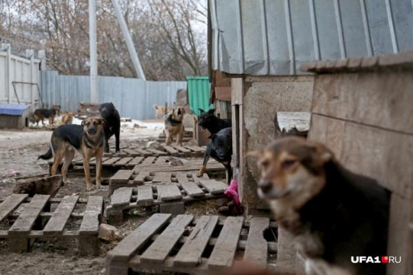 В Башкирии официальных приютов для бездомных собак нет, животными занимаются лишь волонтеры
