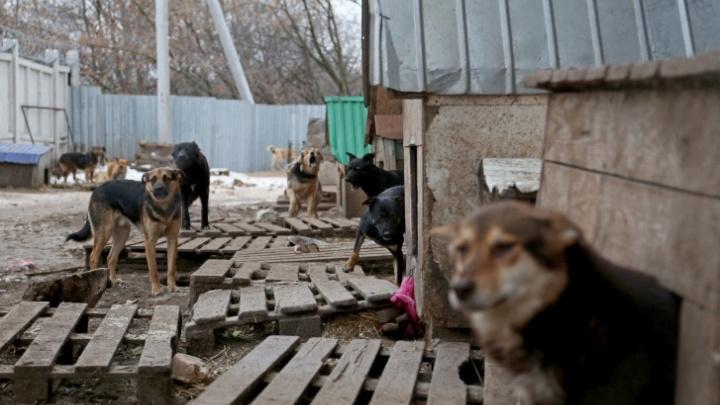 Московская компания нашла нарушения в работе районной администрации Башкирии, где собаки загрызли ребенка