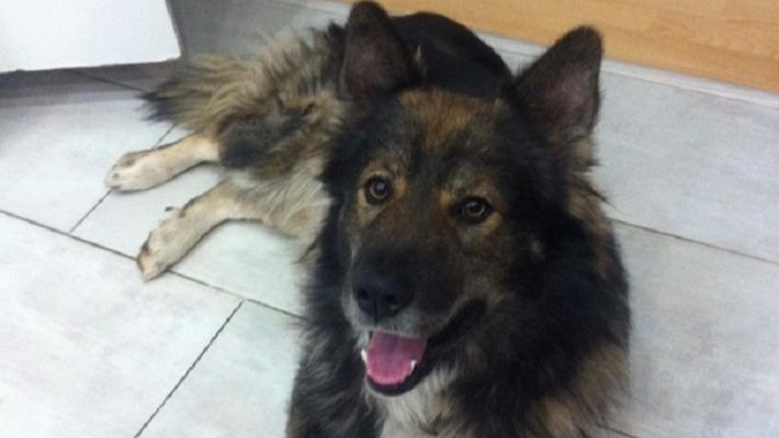 «Джона я взял еще щенком»: пермяк не согласен со штрафом, который ему выписали за повторный отлов собаки из приюта