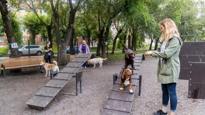 «Нас поставили перед фактом»: жители Кольцевой устроили друг с другом войну из-за собачьей площадки