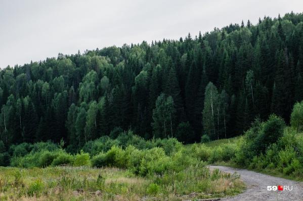 Большинство микроземлетрясений происходит в районе поселка Таборы