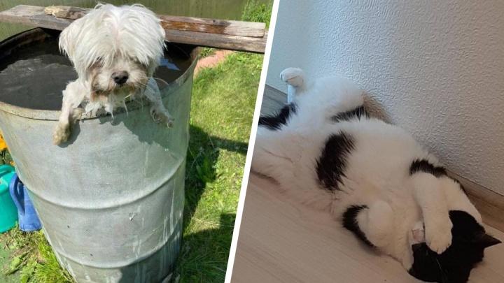 На улице пекло: 17 фото, как находчивые котики и песики спасаются от жары