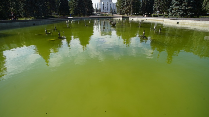 Зрелище не фонтан: в сквере на площади Революции зацвела вода