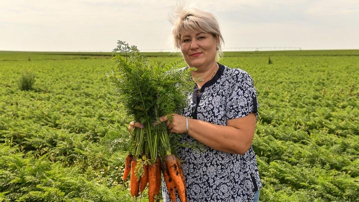 Наша дорогая морковь: как спасают овощи на уральских полях и почему цены не падают даже в разгар сезона