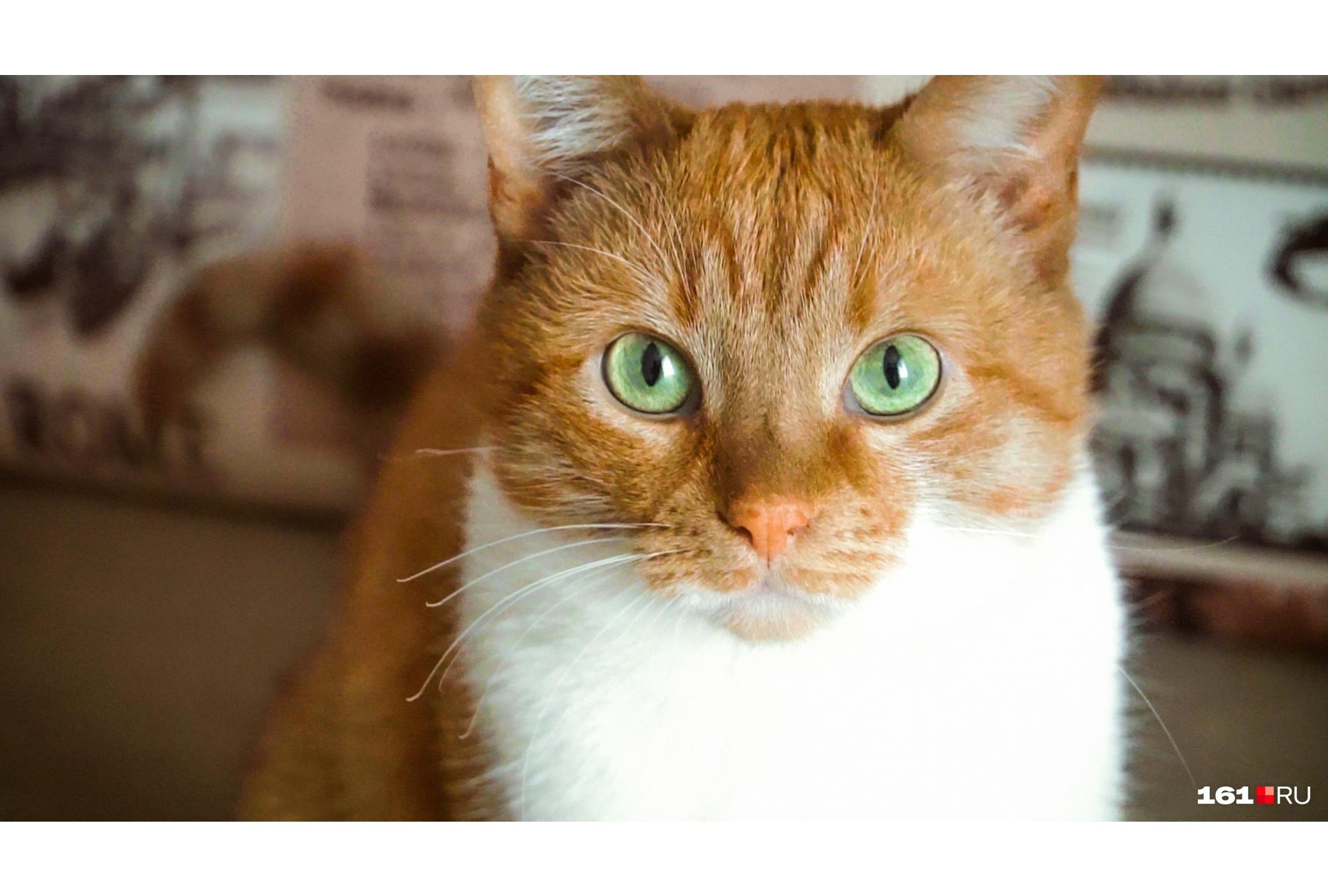 Доволен и рыжий кот семейства, который постоянно мерз на Суворова<br>