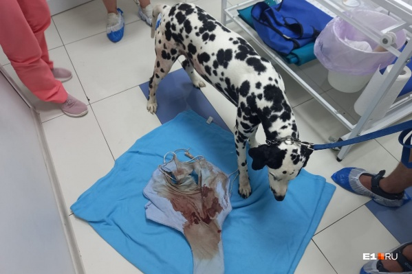 Собака была на грани смерти