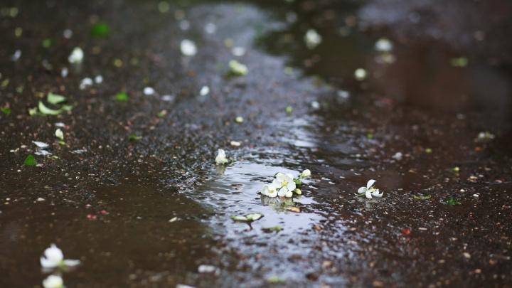 Ждем дождя: на Ярославль надвигается грозовая туча