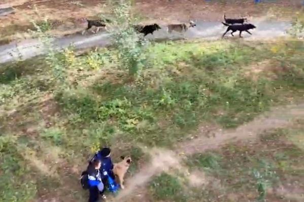 Собаки бегают по поселку Фёдоровка большой стаей и внешне выглядят агрессивными