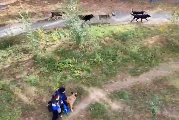«Лают, рычат. Очень страшно!»: стая бродячих псов оккупировала район Челябинска и держит его в страхе
