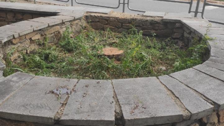 В Челябинске нашли место для высадки новых даурских лиственниц