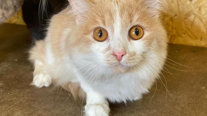 В аэропорту Кольцово спасли кота, брошенного пассажиркой