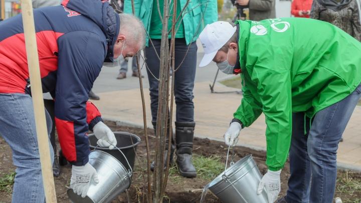 Кто высадил новые деревья в Красноярске и еще трех городах — фоторепортаж